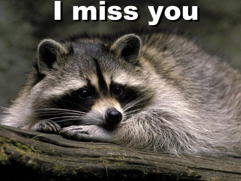 cute miss you images. cute miss you images. cute miss you images. cute miss you images. liketom