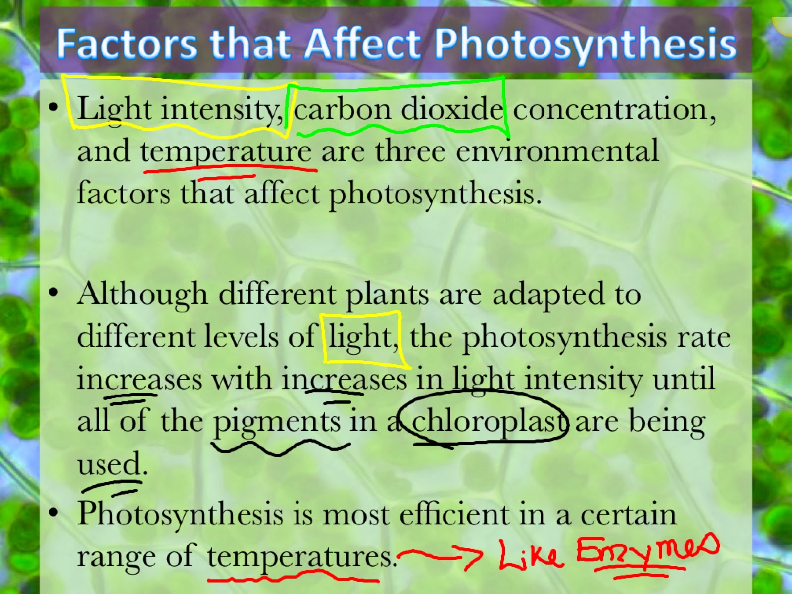 Rhizome - Wikipedia 3 factors effecting photosynthesis