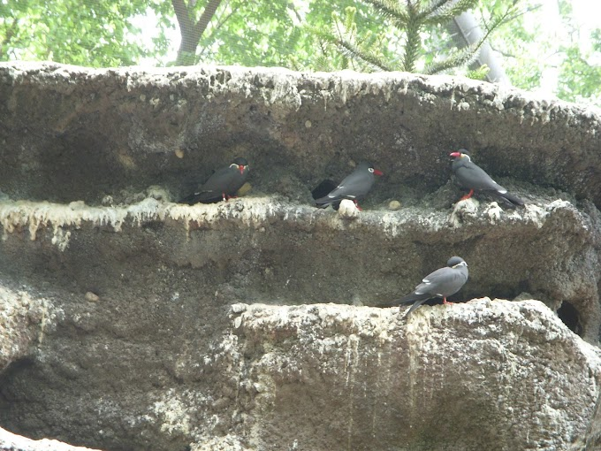 Bronx Zoo Part III: Aquatic Birds and Birds of Prey