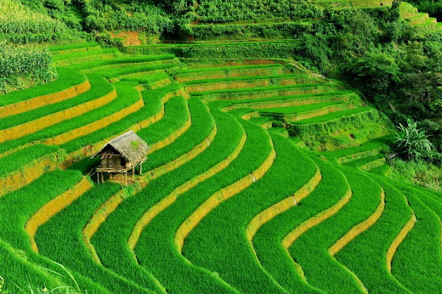 Beautiful Terraced Fields in Vietnam