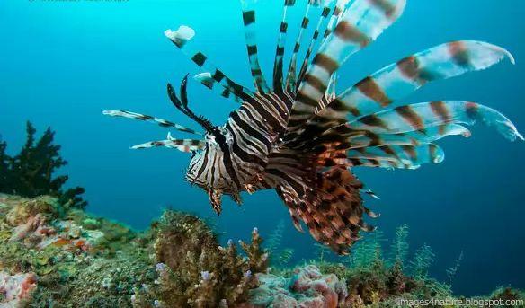 صور لسمكة أسد البحر