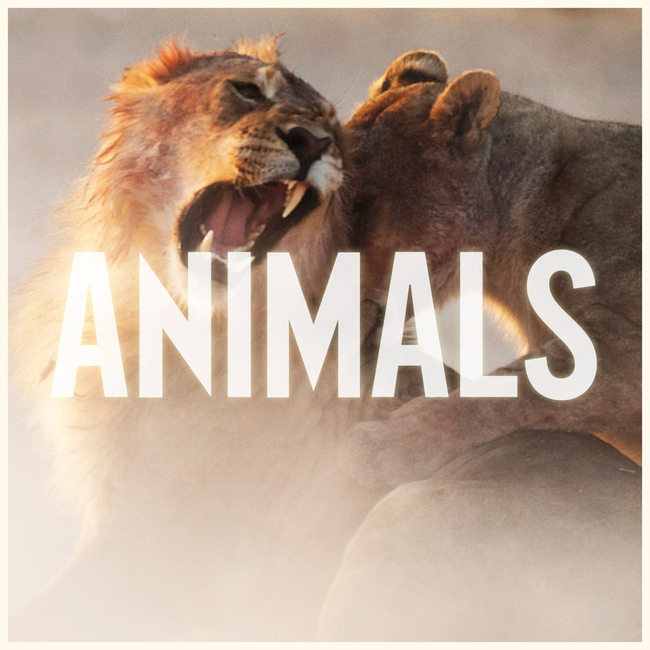 Animals by Maroon 5