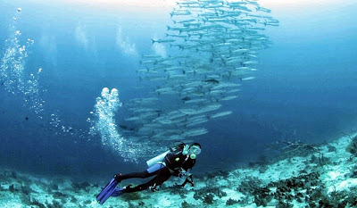 """<a href=""""http://mataram.info/things-to-do-in-bali/visitindonesia-banda-marine-life-the-paradise-of-diving-topographic-point-inward-fundamental-maluku/"""">Indonesia</a>best destinations : How To Live On Baracuda Point"""