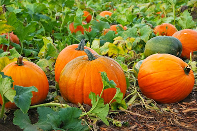 7 Health Benefits of Pumpkin For Body