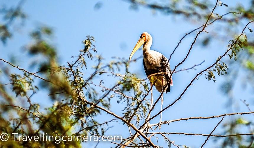 Birds in Delhi Zoo, India