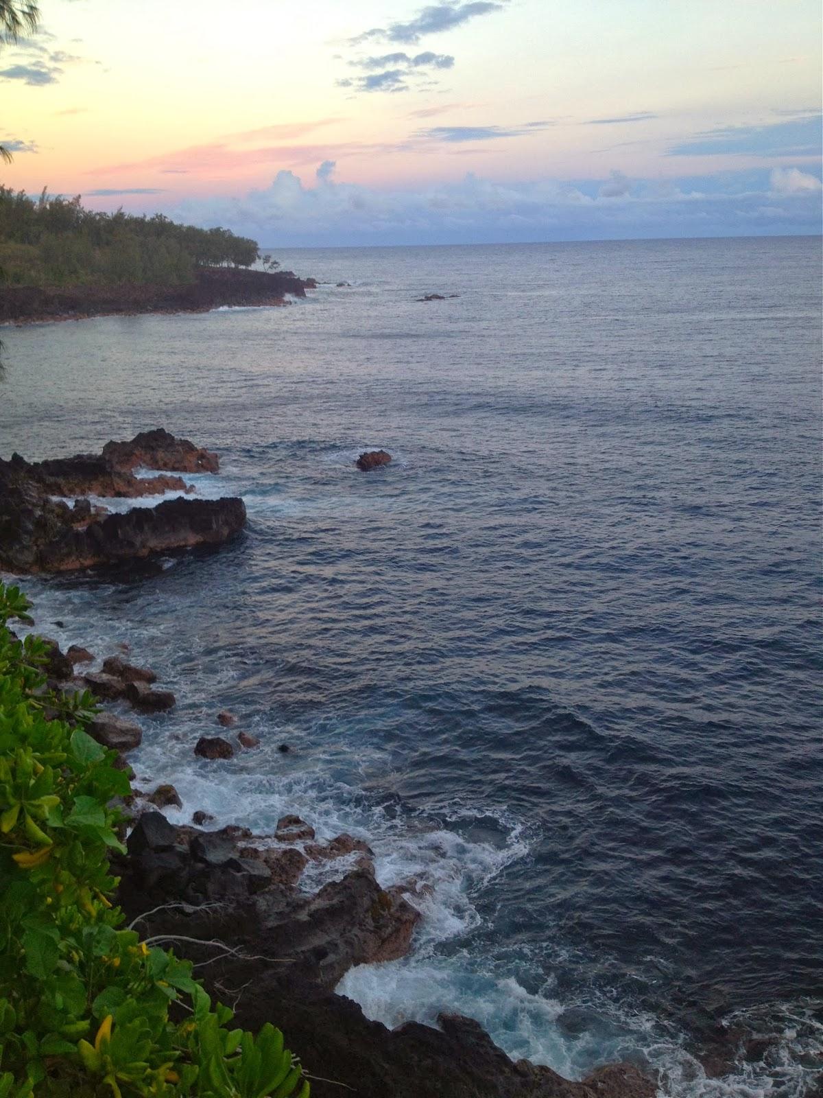 palm silhouette big island hawaii Wallpapers HD - palm silhouette big island hawaii wallpapers