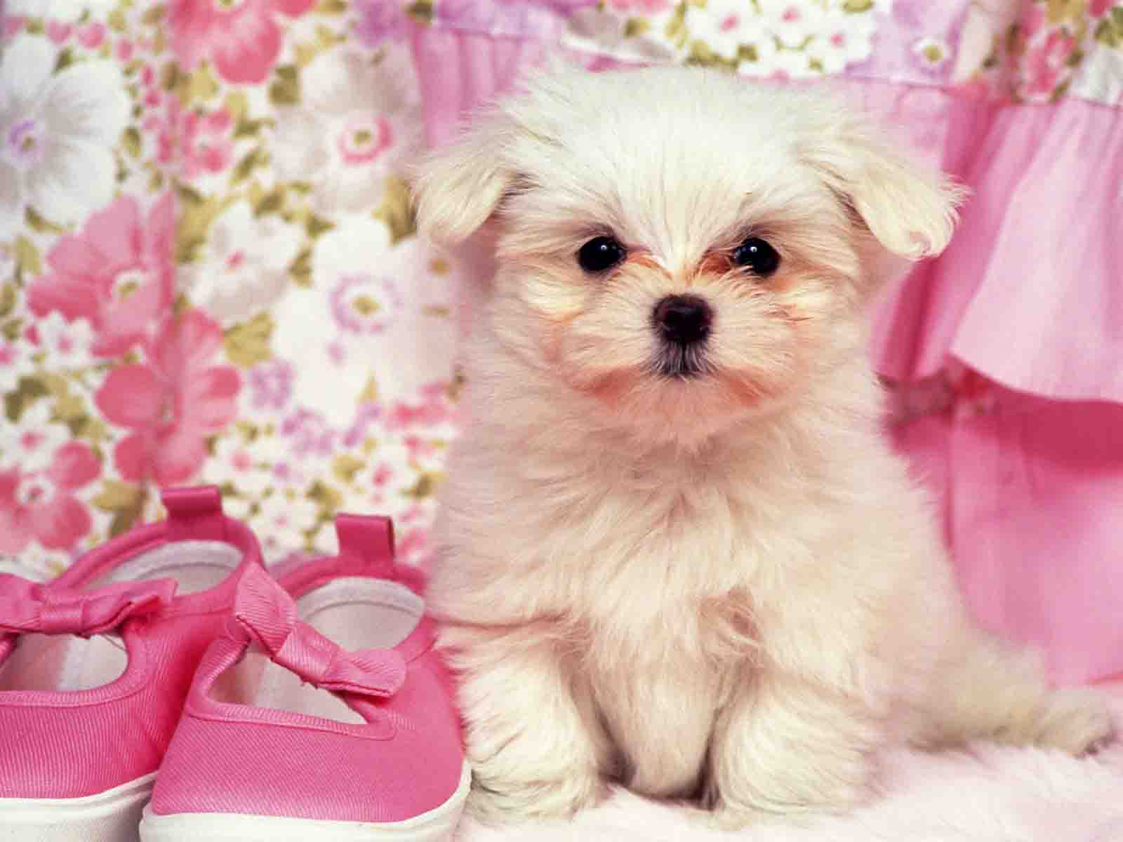 Hd wallpapers cute puppy hd wallpapers for Adorable wallpapers