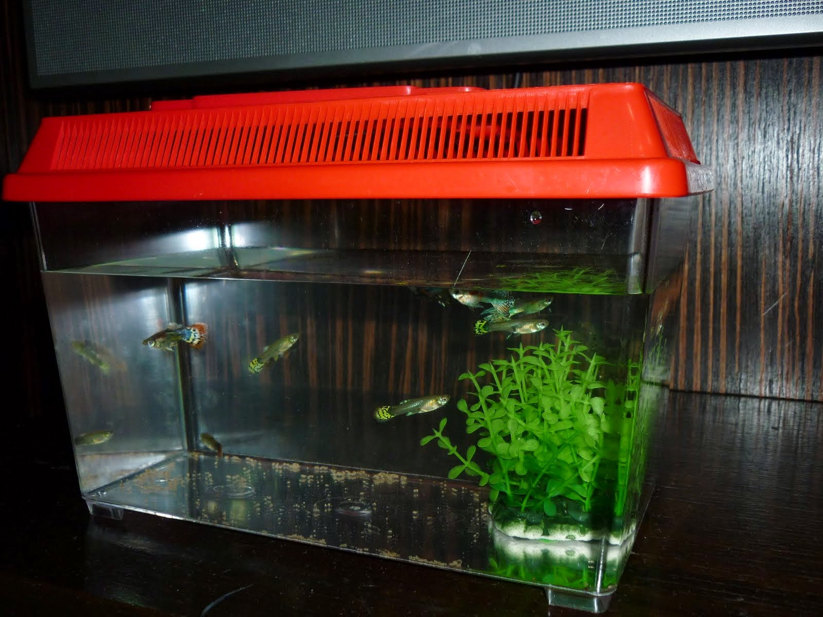 Nerd Quari T Nepal Fish Tank Most Important Things For