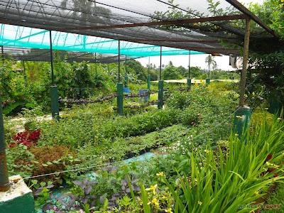 Mango Tours Tagaytay Paradizoo garden