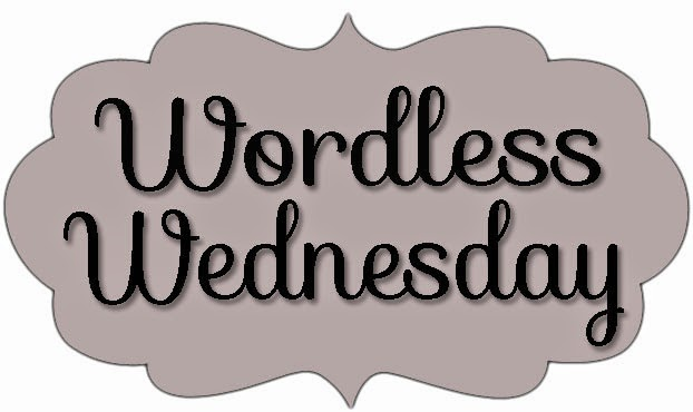 Wordless Wednesday 49