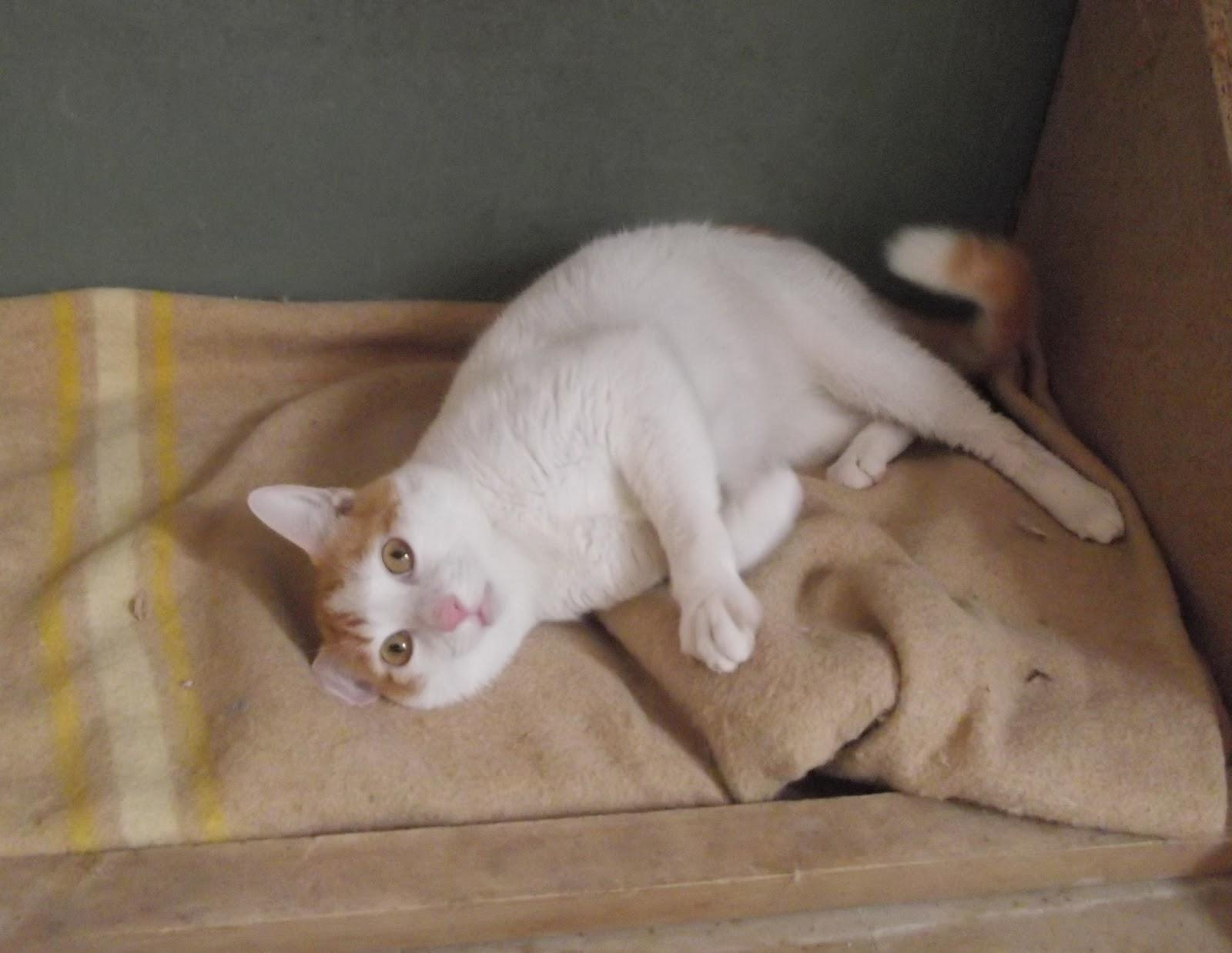 Lenguaje y comunicación del gato