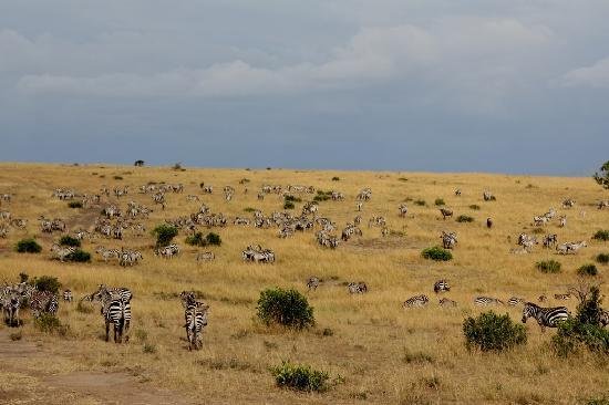 Be A Trip Make A Trip Masai Mara National Reserve A Big