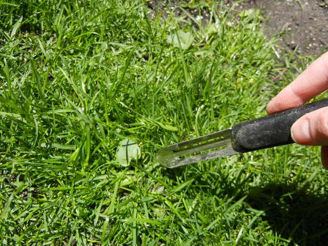 Green thumb lawn weed killer