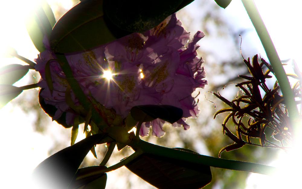 Kukkasen avautumisia
