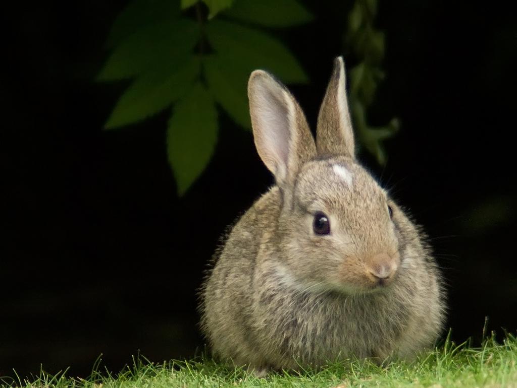 http://4.bp.blogspot.com/-Po_Mvqqcdtg/UaGi_EkfR5I/AAAAAAAAFKU/jG-F7oNsoi0/s1600/rabbit.jpg