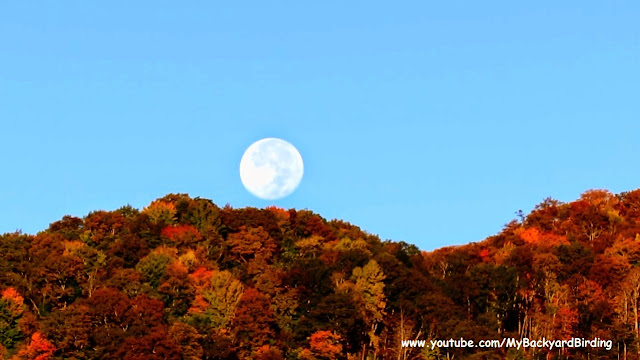 Autumn Mountain Sunrise and Moonset Fall Foliage