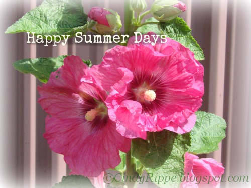 Pink Cottage Garden Flowers, Language of Flowers, Hollyhocks, Mary Jo Leisure, Cheri Rol, Cindy Rippe, Florals-Family-Faith
