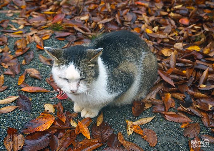 落葉と猫 - 舞鶴公園、福岡