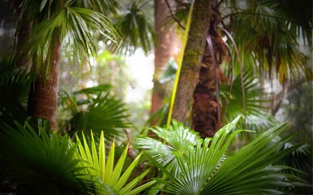 Hutan Paya Gambut