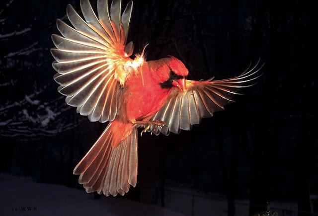 நான் பார்த்து ரசித்த புகைப்படங்கள் சில.... - Page 2 Flying+Birds+%25289%2529