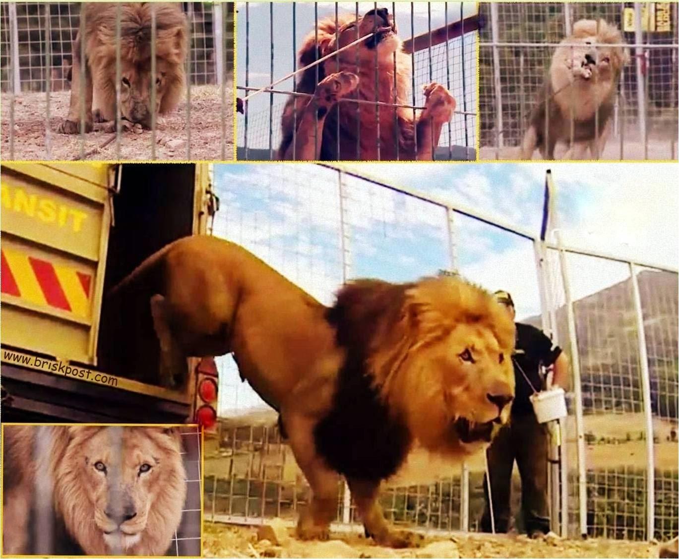 Real King, Lion in Grand Finale climax of Khatron Ke Khiladi Darr Ka Blockbuster