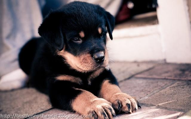 Sweet puppy.