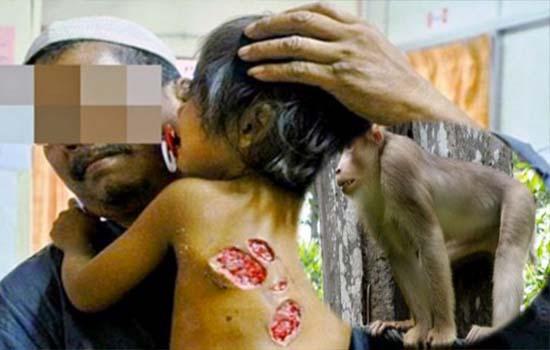 Budak dirogol monyet kerana ibu leka Berfacebook