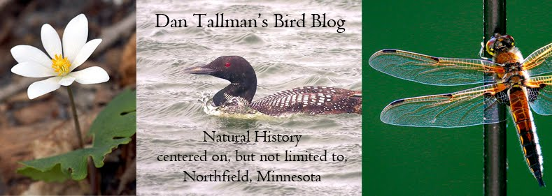 Dan Tallman's Bird Blog