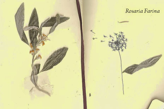 rosaria farina