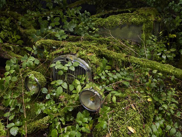 Fresh Pics Abandoned Antique Cars Reclaimed By Nature