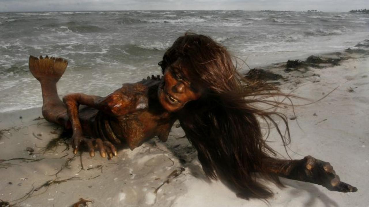 Are mermaids real 5 real cases of mermaid sightings - Real Mermaids
