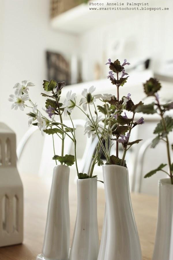 sia vas, vit vas, blommor från trädgården, å matsalsbordet, matbord, vaser, vasen,