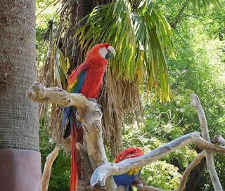 Parrots at Charles Paddock Zoo, Atascadero, © B. Radisavljevic