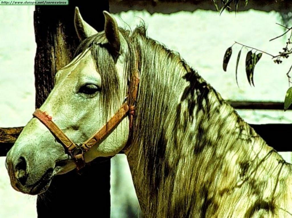 fotos-de-caballos-pura-sangre