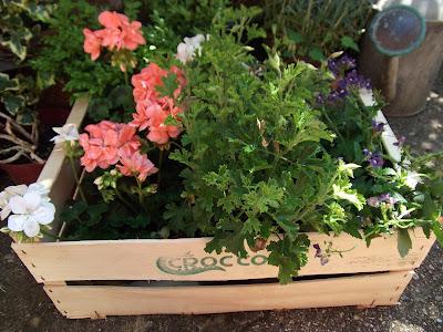 plantskatysclutter