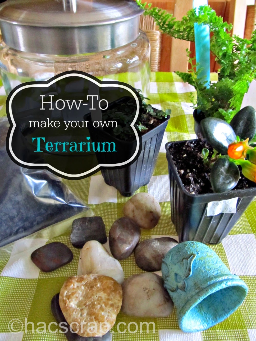my scraps how to make your own terrarium. Black Bedroom Furniture Sets. Home Design Ideas