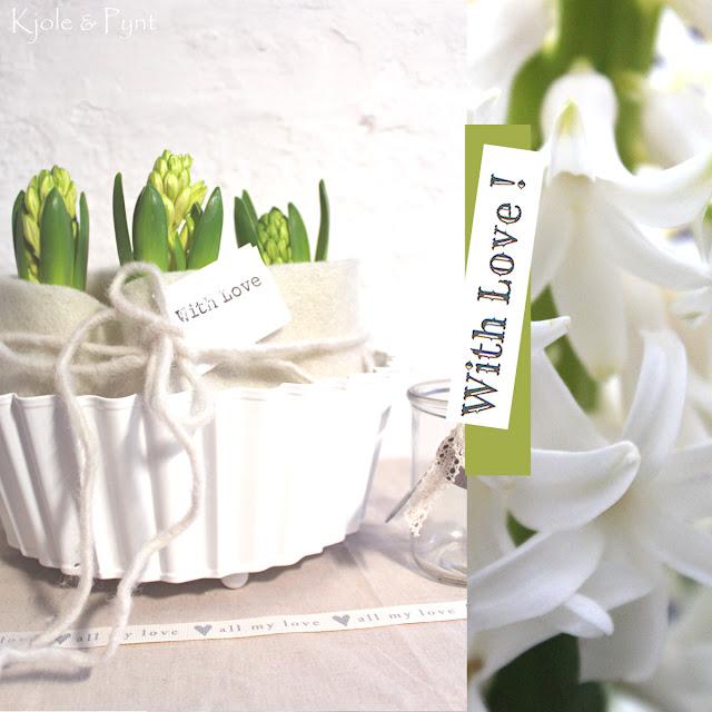 With love weiße hyazinthen white hyacinthus