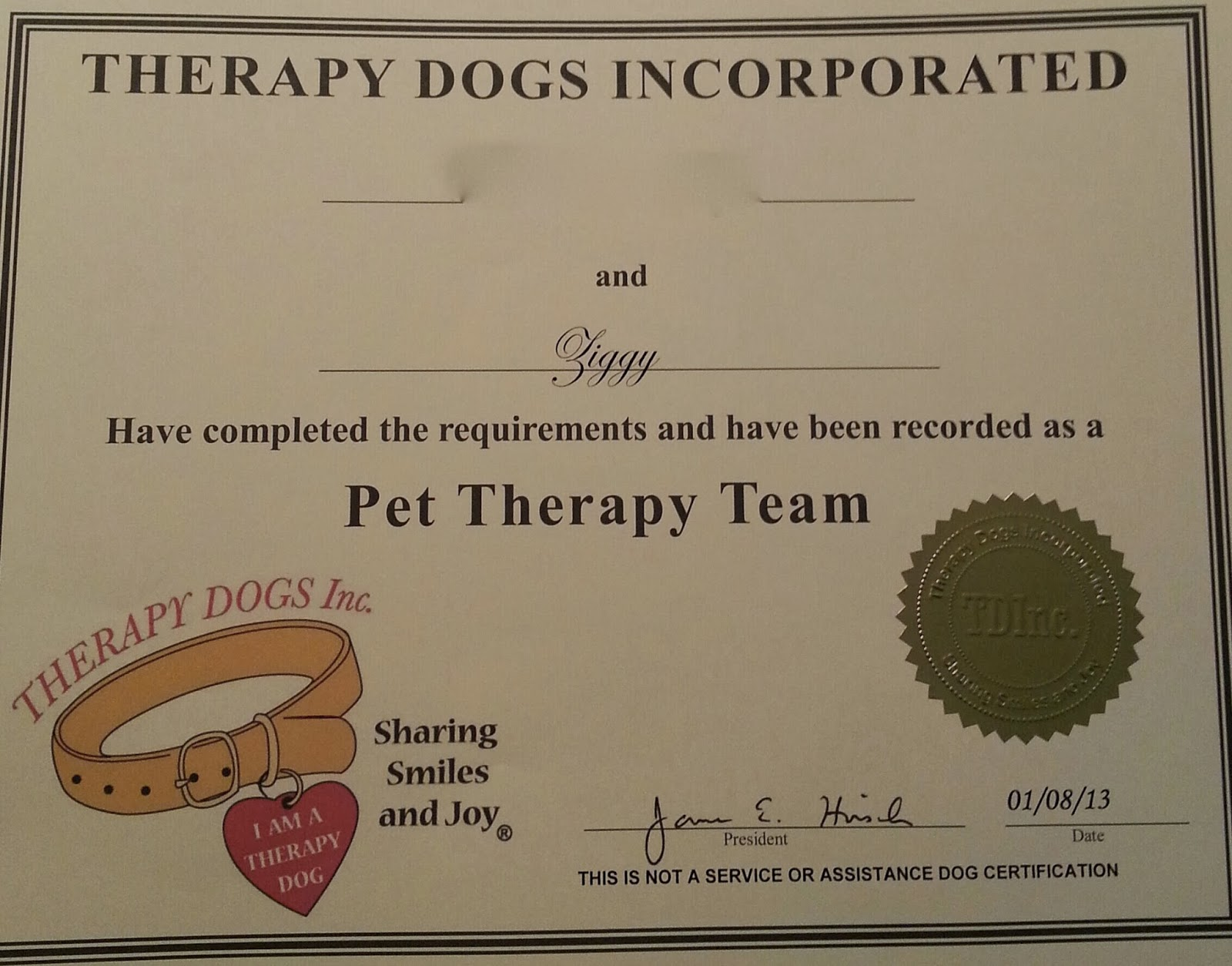 Wags n woofs ziggy therapy dog the husband worked with ziggy to become a certified therapy dog with therapy dogs inc ziggy passed his requirements late last year and today he and the xflitez Images