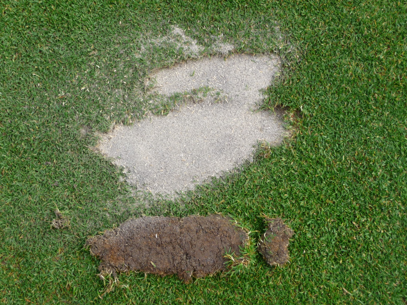 Image result for golf divot sand and sed