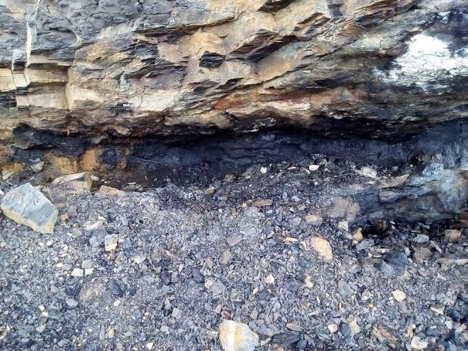 CAS investiga explotación ilegal de carbón y frailejones en el páramo de Almorzadero, jurisdicción de Carcasí
