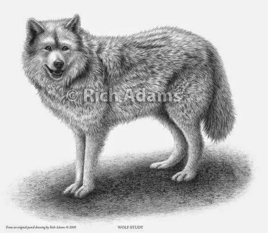 retratos-realistas-de-lobos