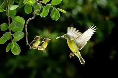 Thiên nhiên hoang dã tươi đẹp, hinh anh dep
