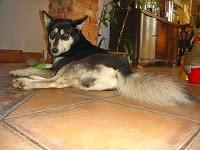 Pies idealny szuka domu