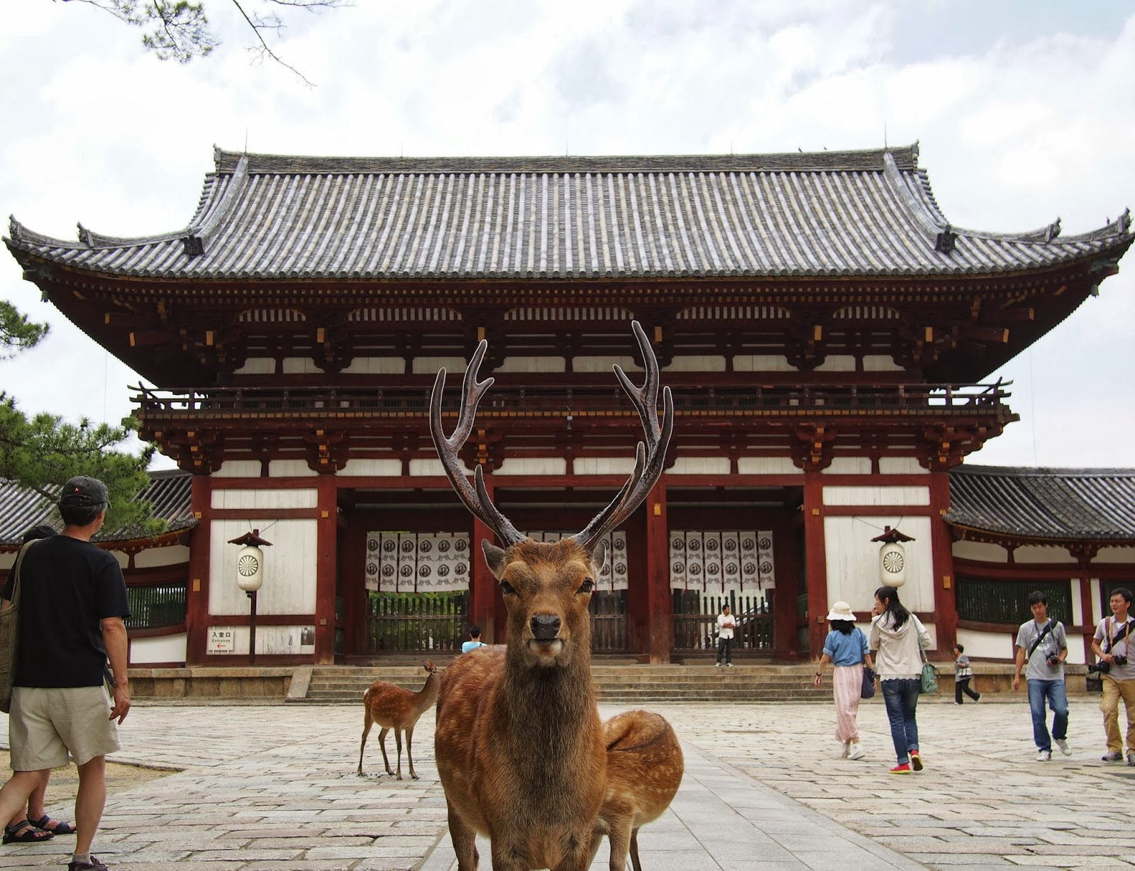 Nara Japan  city pictures gallery : 1nx8ys went to nara japan this guy was guarding todaiji
