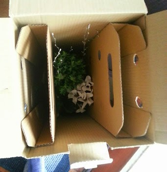 Bunches UK flower and plant delivery - cardboard packaging review