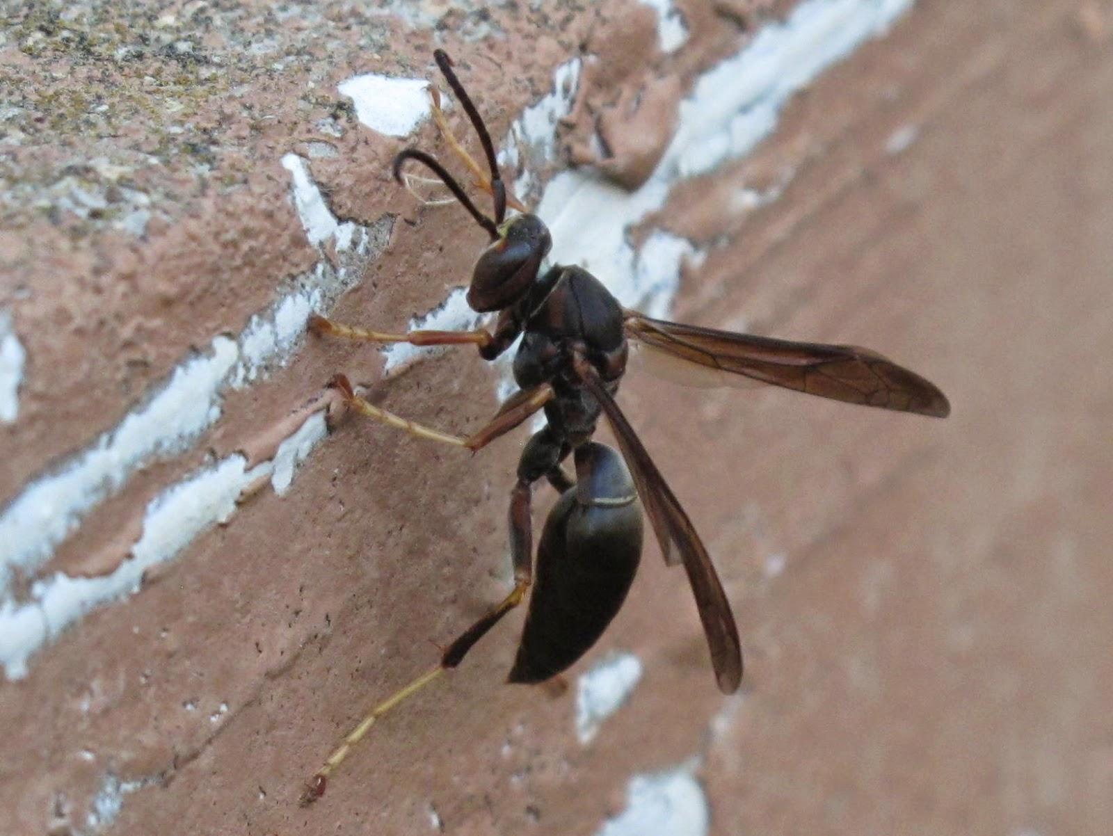 Blue Jay Barrens Outcast Wasps