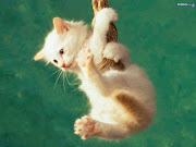 Cute Cat kittens Pictures .amp; Images.