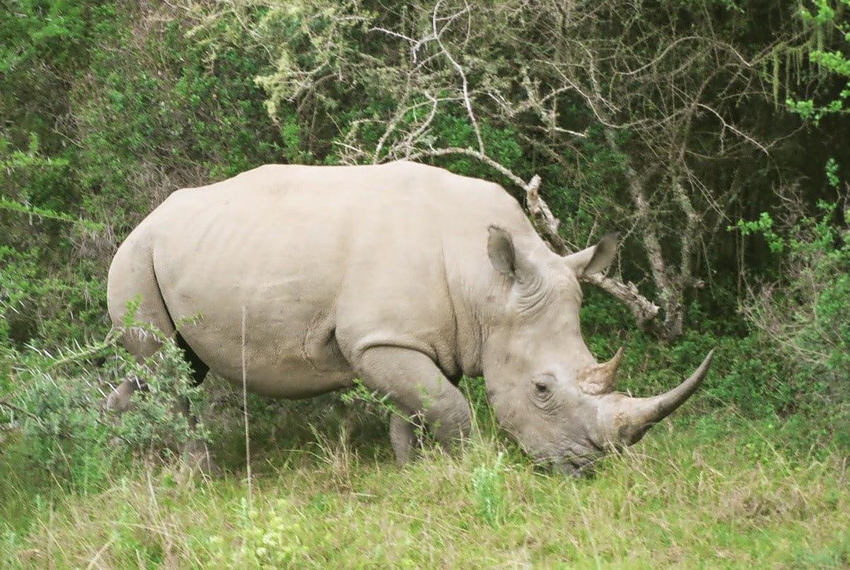Q De Rhino Geração Verd...