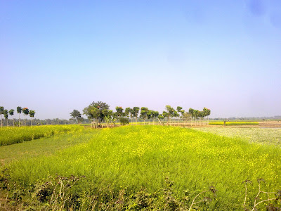 Natural Field India