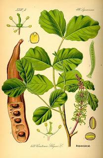 plantas del bosque mediterraneo